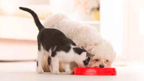 alimentacion-para-mascotas