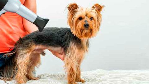 peluqueria-canina-y-felina