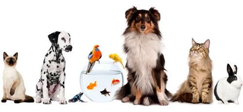 clinica-veterinaria-en-la-moraleja-y-soto-moraleja